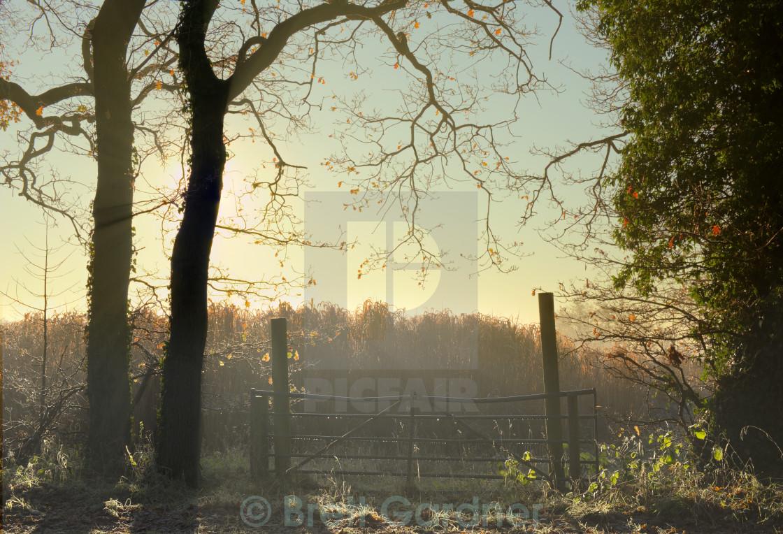 """Fence on a misty morning"" stock image"