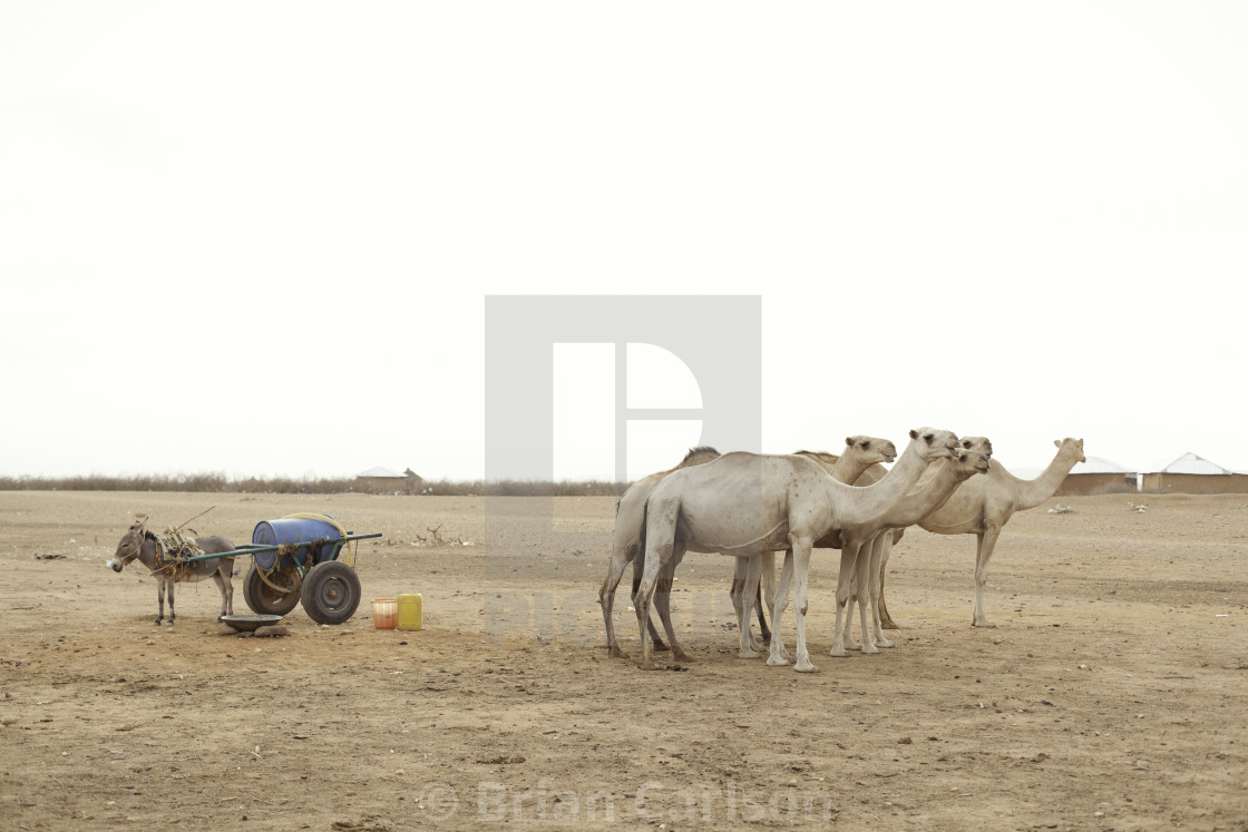 """Camels and a donkey with a cart in Gode, Ethiopia"" stock image"