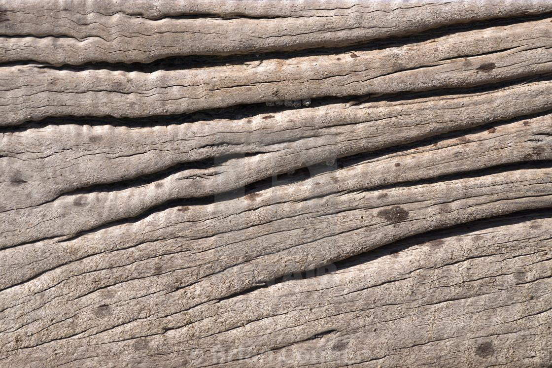 """Driftwood"" stock image"
