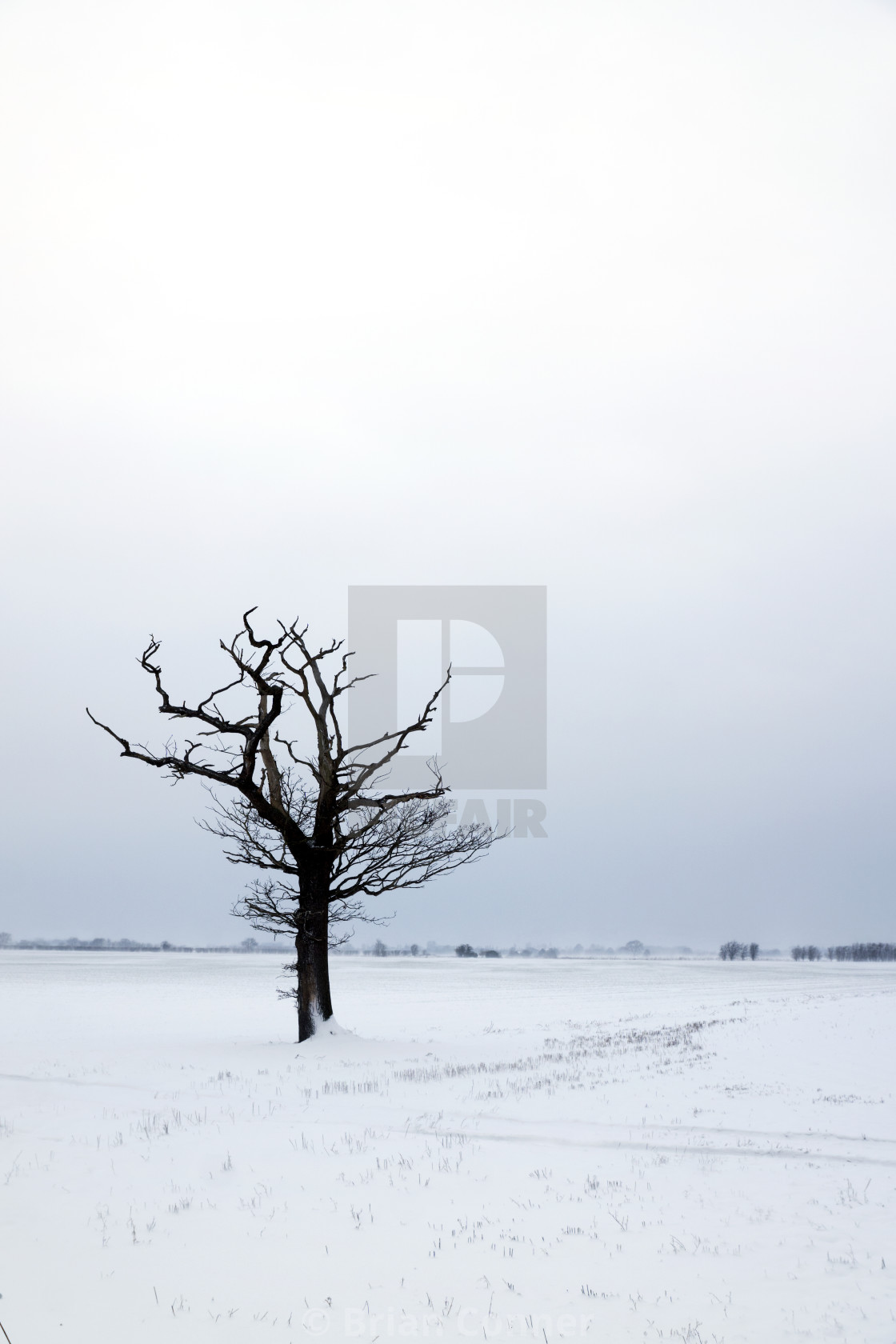 """Lone, dead tree in the snow."" stock image"