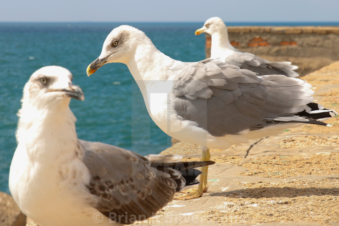 """Gulls of Cadiz"" stock image"