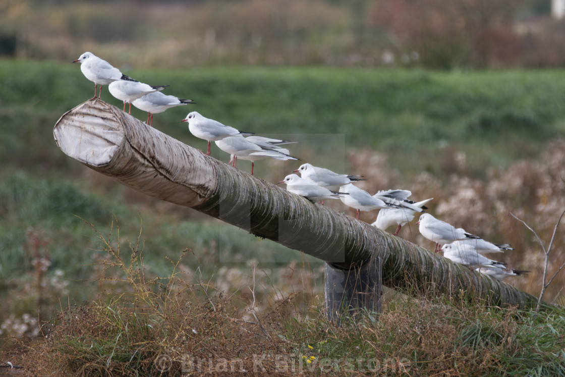 """Gull Line"" stock image"