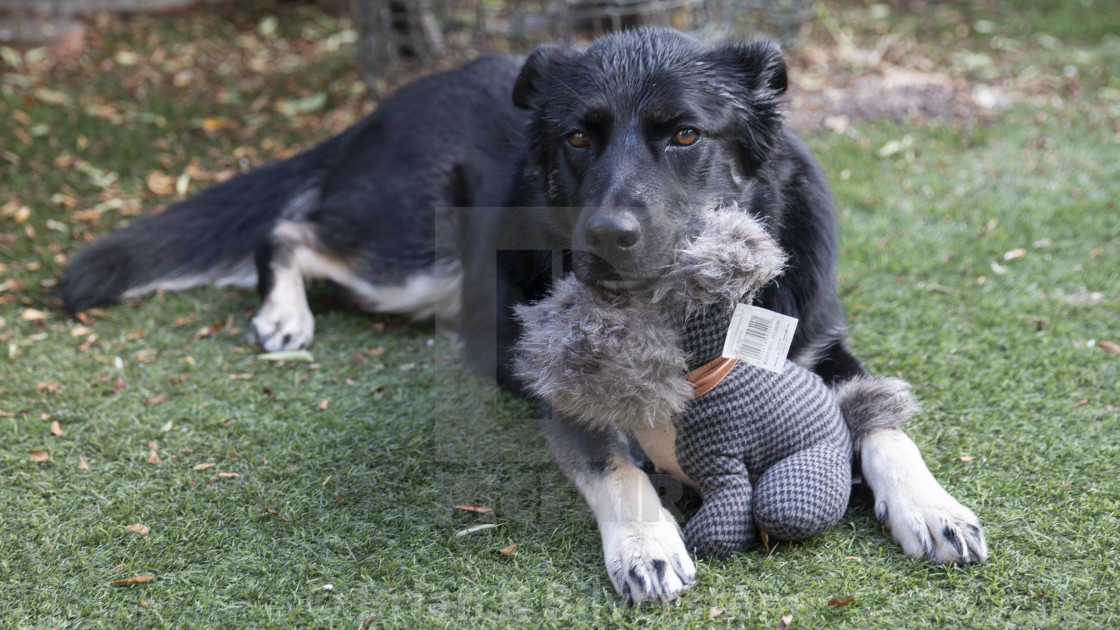 """Layla's Toy"" stock image"