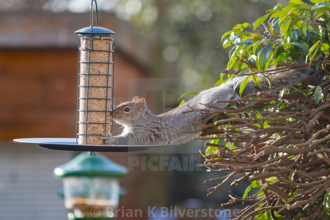 """Lazy Feeder"" stock image"