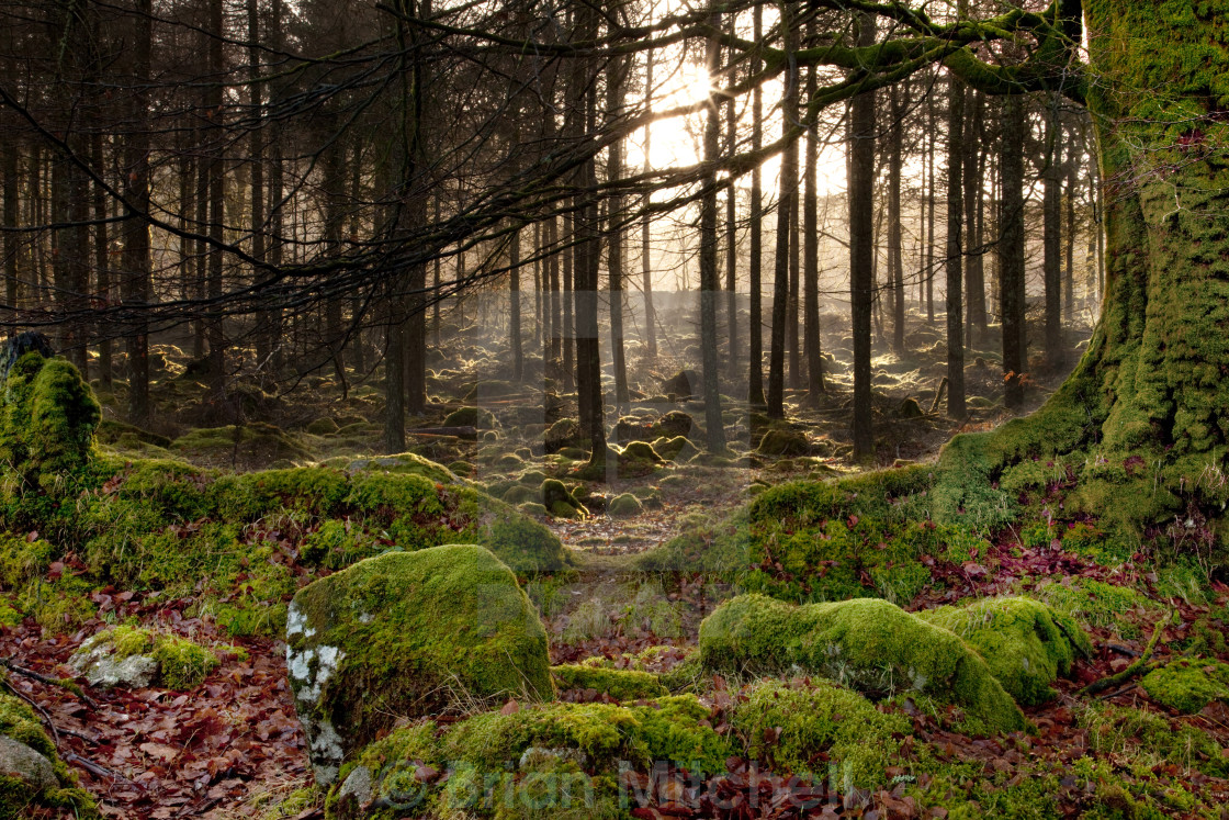 """Forest of Green Moss"" stock image"