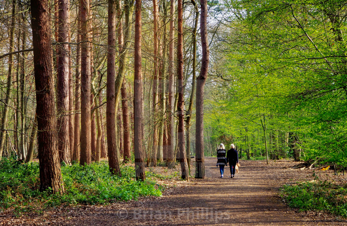 """Thorndon Country Park"" stock image"