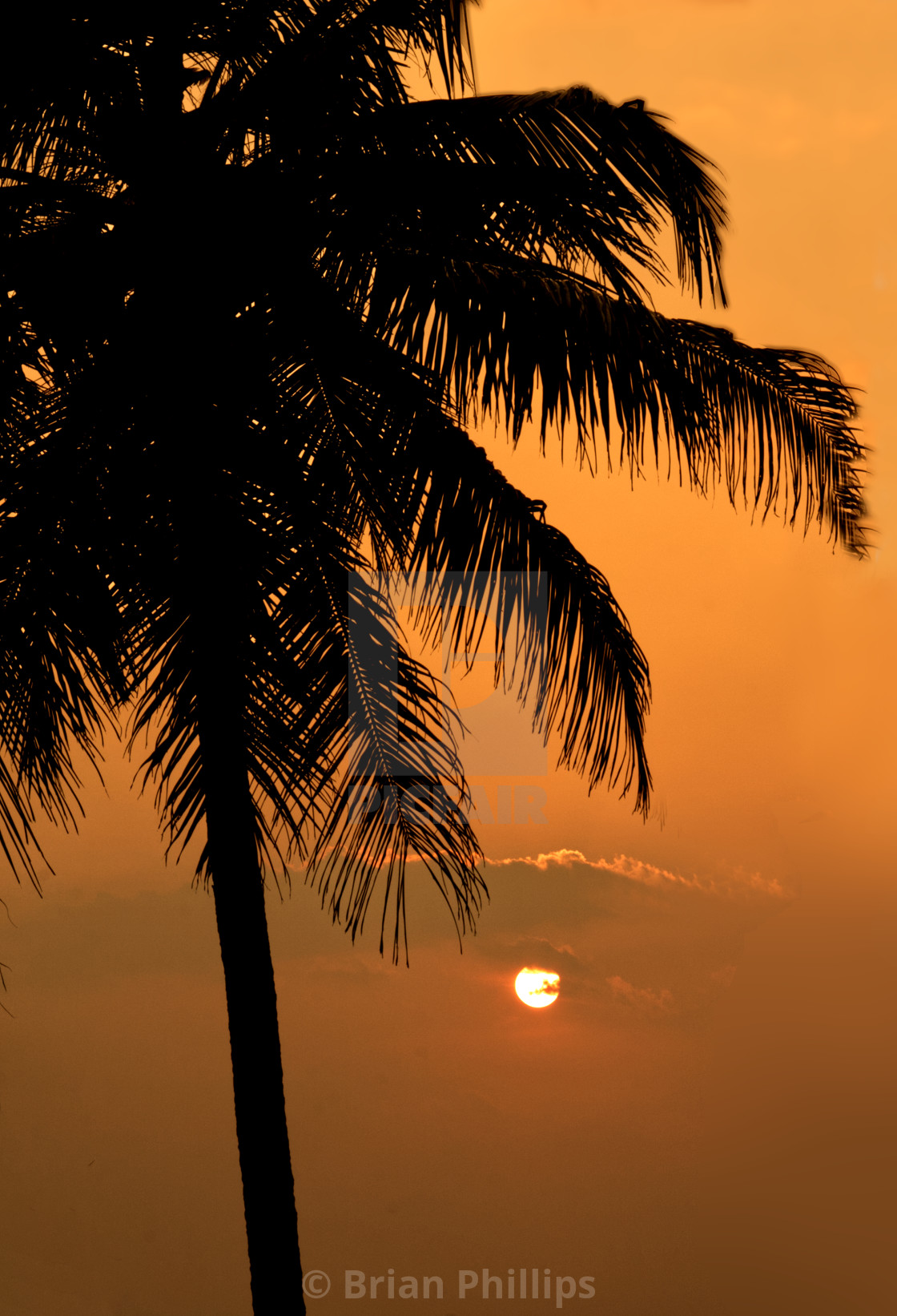 """A Palm tree against a sunset"" stock image"
