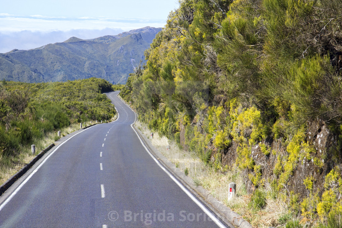 """Road in Paul da Serra in Madeira"" stock image"