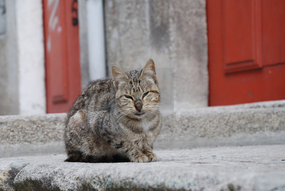 """Ugly street cat"" stock image"