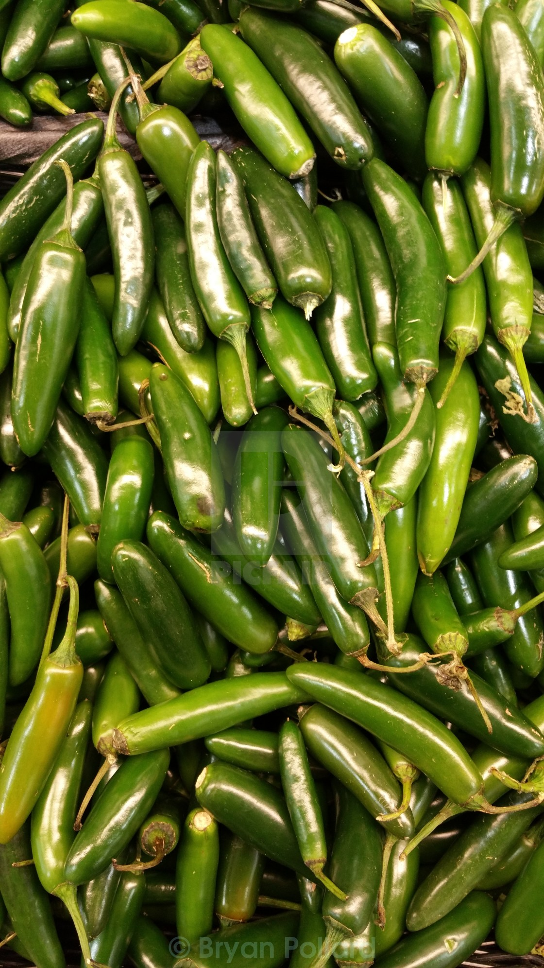 """Jalapeño Peppers"" stock image"