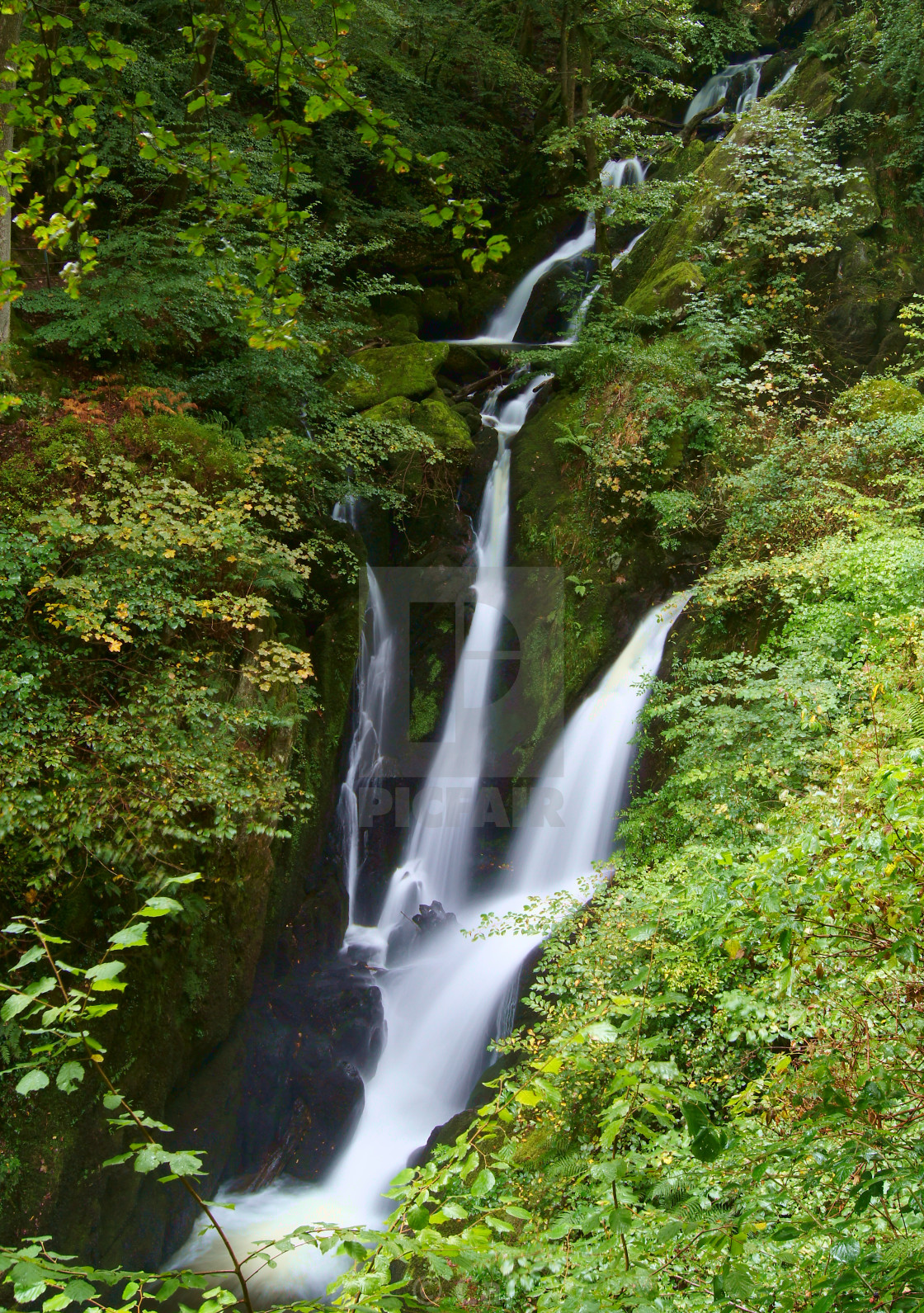 """""""Stock Ghyll Force waterfall, Lake District, England"""" stock image"""