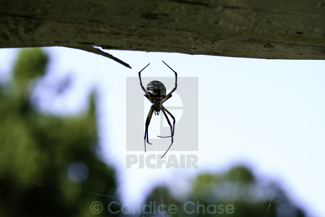 """spider on wood"" stock image"