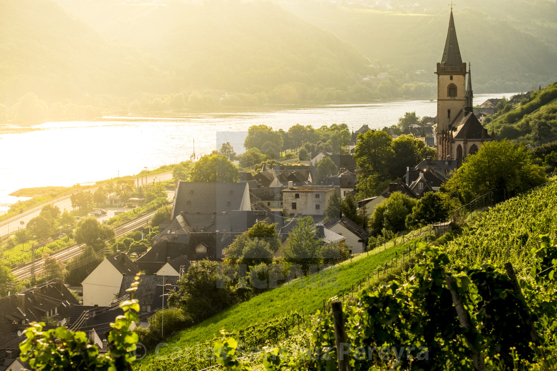 """Vineyards around the village of Lorch in Rhine river"" stock image"