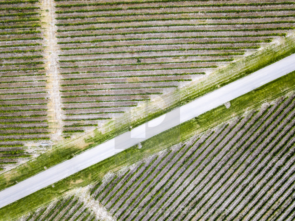 """Aerial view of vineyards in Huesca Spain Europe"" stock image"