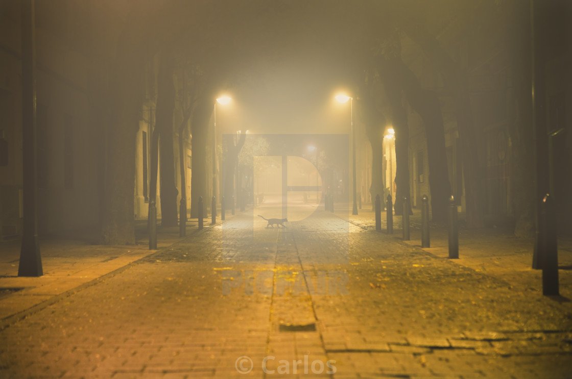 """Urban street at night"" stock image"
