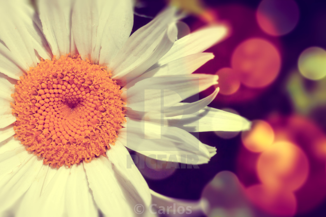 """""""Daisy abstract background"""" stock image"""
