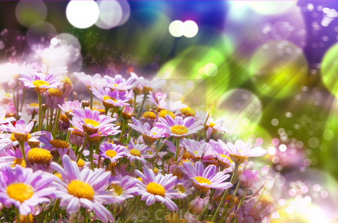 """""""Spring flowering meadows and sunbeam background"""" stock image"""