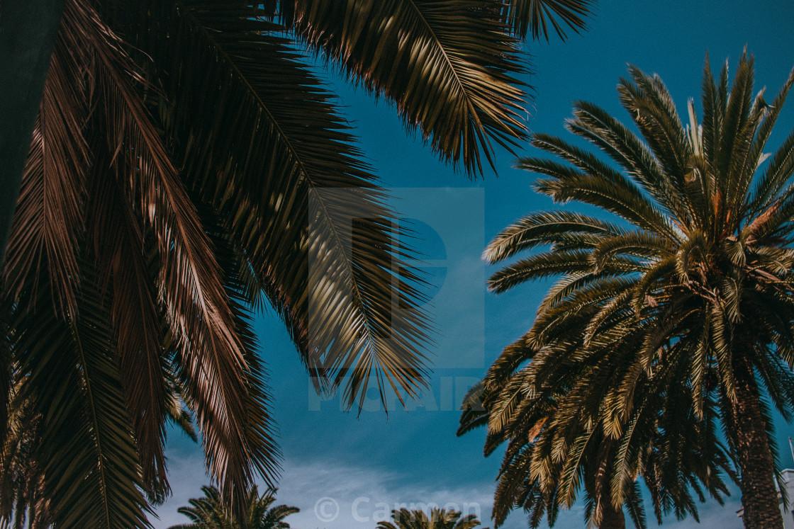 """""""Paradise"""" stock image"""