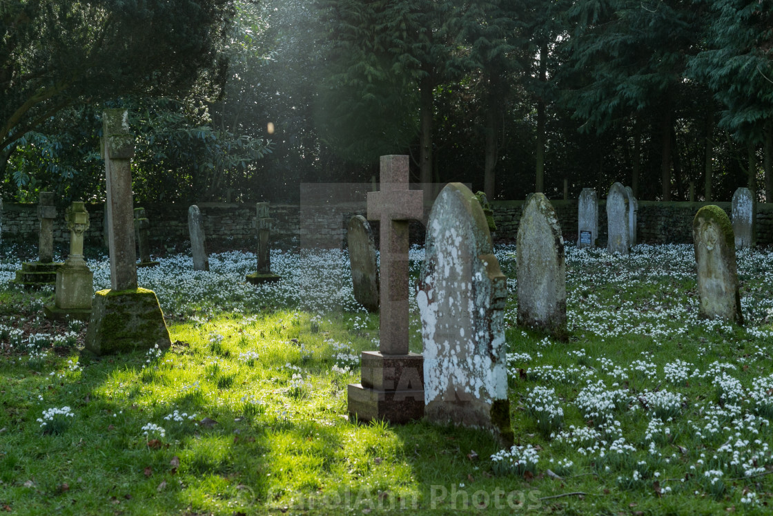 """Snowdrops in the church yard"" stock image"