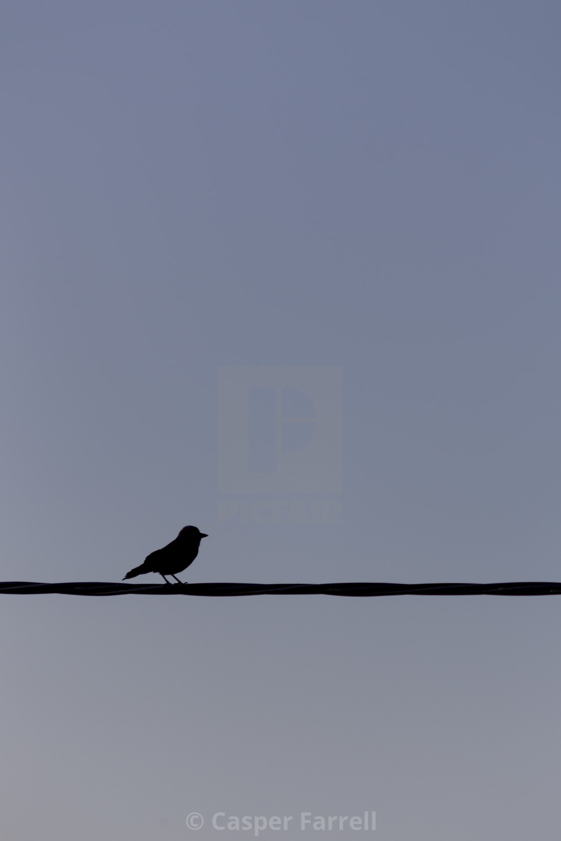 """Black bird on the line"" stock image"