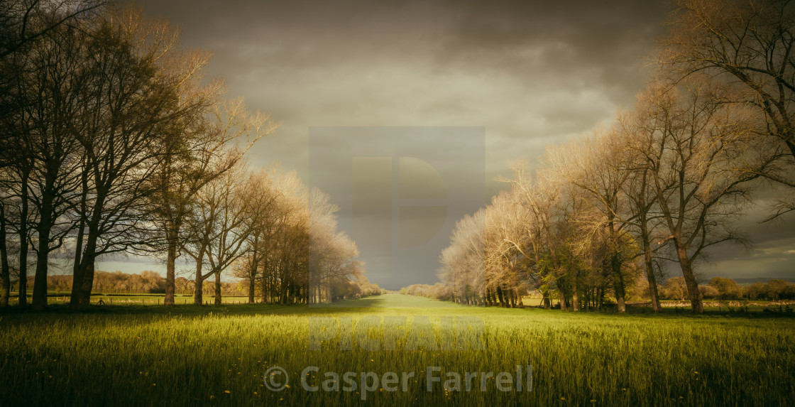 """A flower meadow avenue of trees"" stock image"