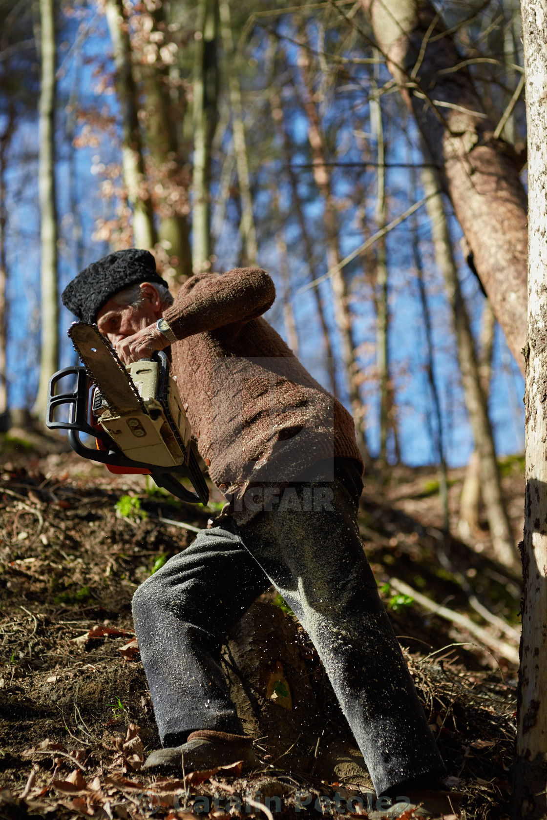 """""""Senior man with chainsaw in a forest"""" stock image"""