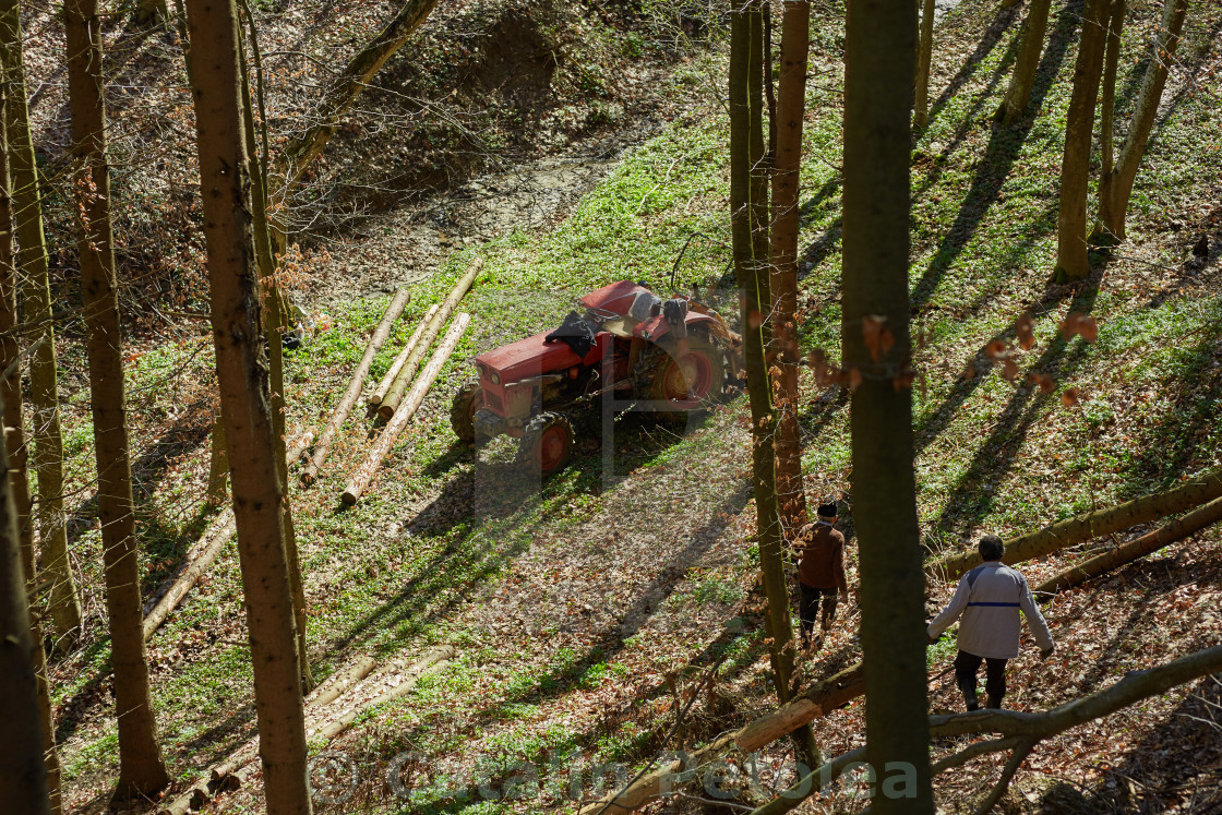"""""""Woodcutters using a logging tractor with winch"""" stock image"""