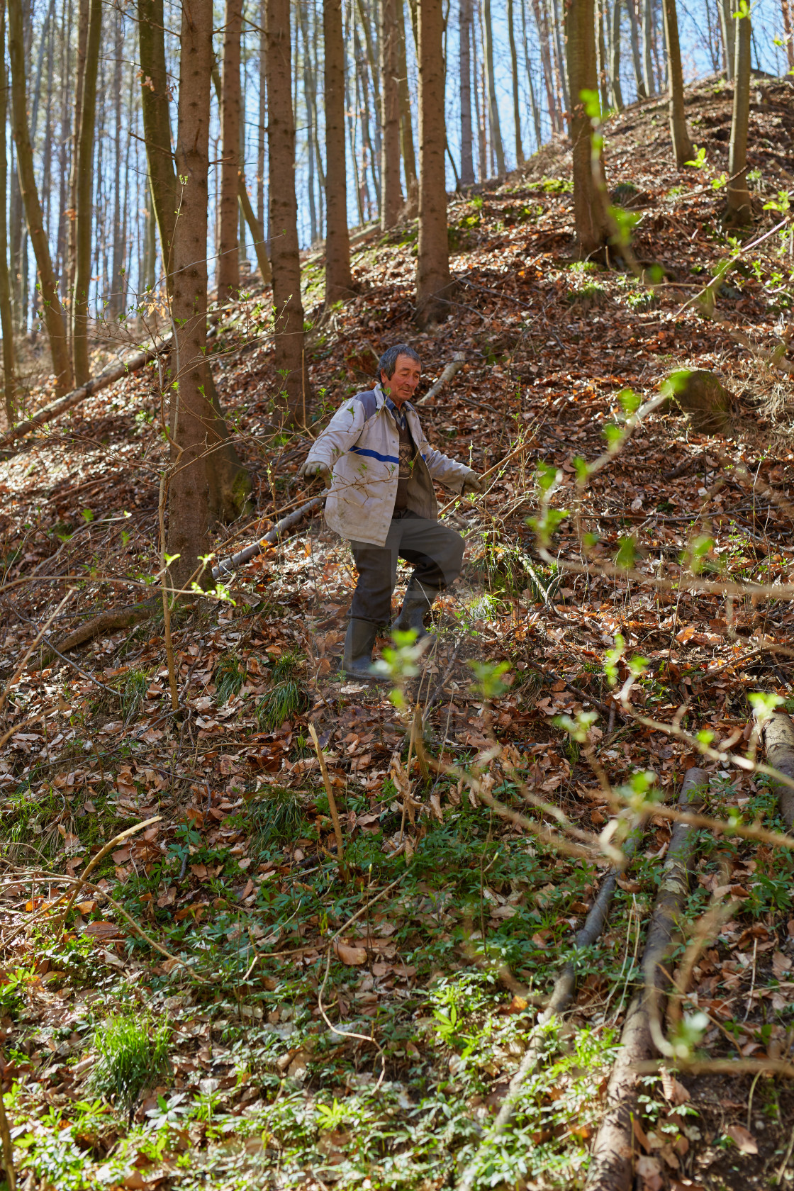 """""""Old woodcutter in the forest"""" stock image"""