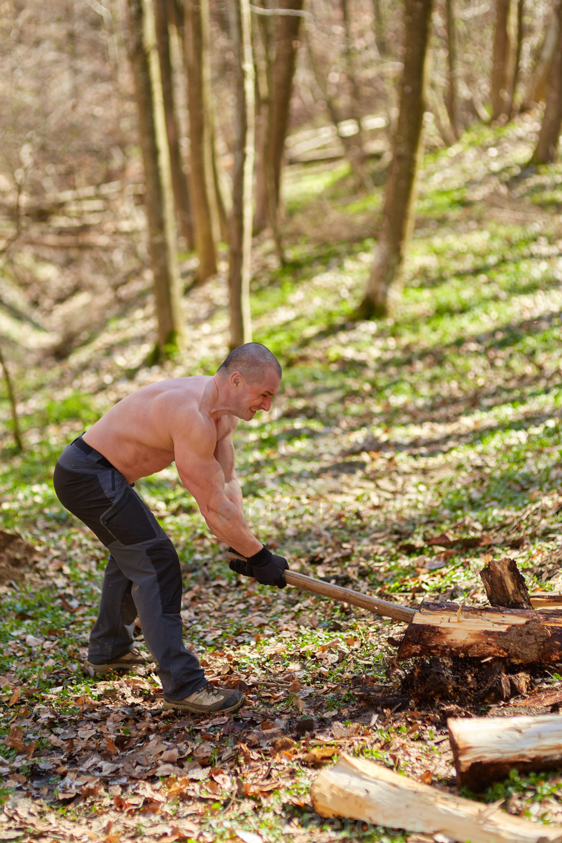"""Strong man splitting logs"" stock image"