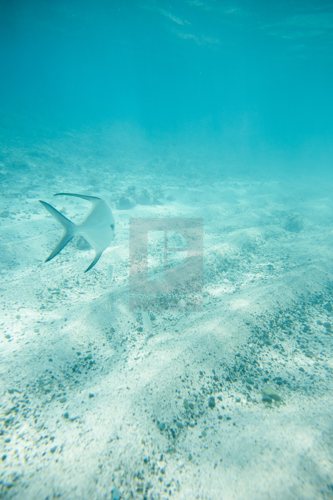 """Fish underwater in the Caribbean"" stock image"