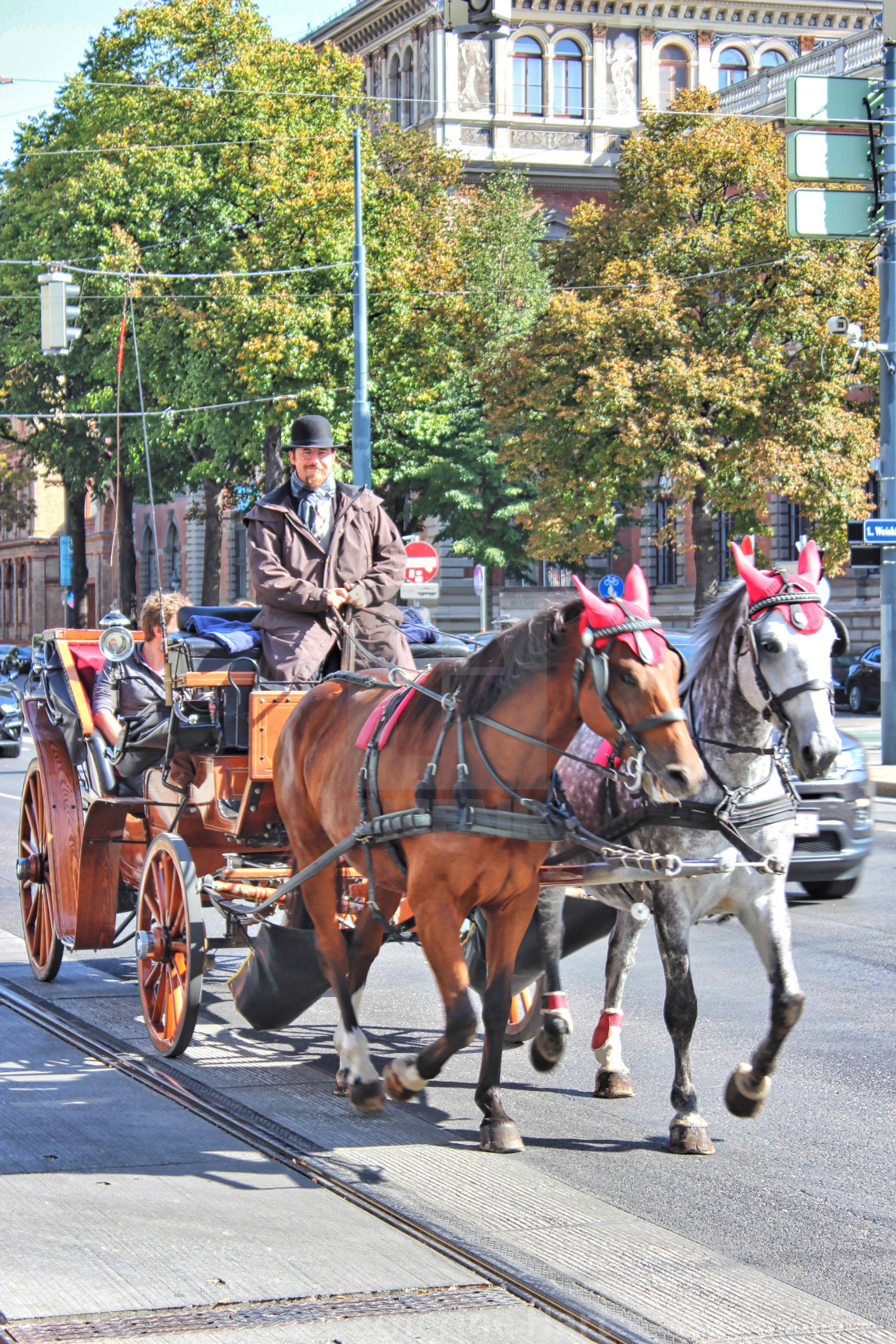 """""""Horse and carriage, Vienna"""" stock image"""