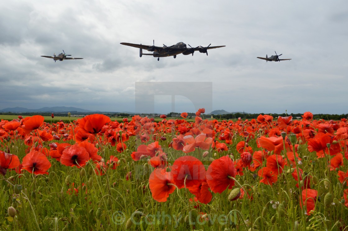 """For the fallen"" stock image"