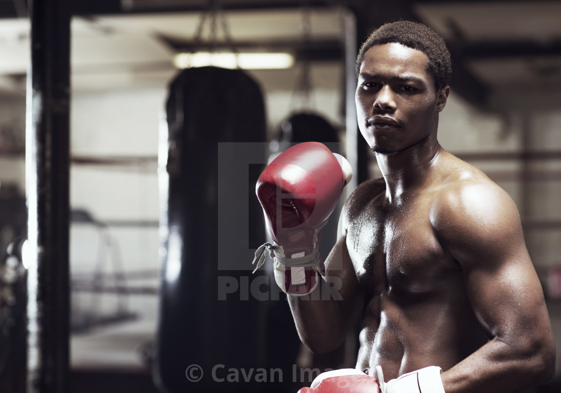 """Boxer wearing boxing gloves while standing in gym"" stock image"