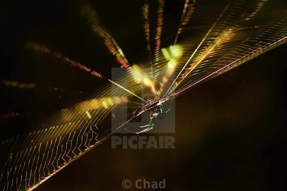 """Spider and web"" stock image"