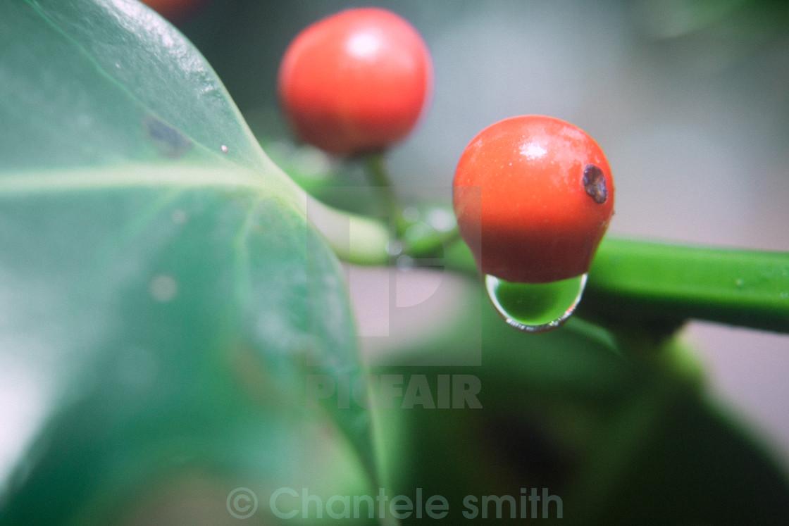 """Berry Drop"" stock image"