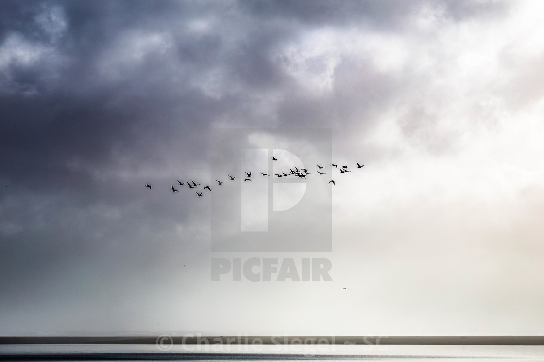"""Birds in Flight from Dark to Light"" stock image"