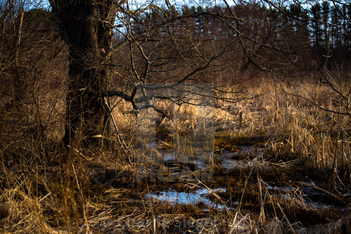 """Wetlands Biome in Connecticut, USA"" stock image"