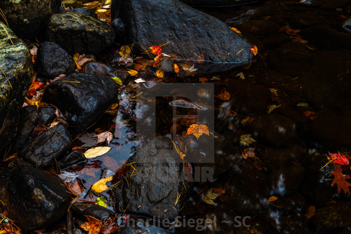 """Autumn Leaves by the Water"" stock image"