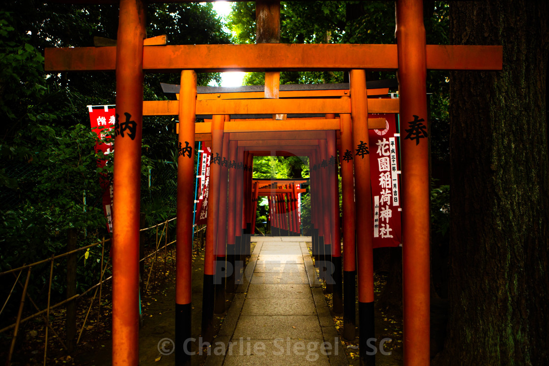 """Vermilion Torii Gates in Hanazono Inari Shrine, Ueno Park"" stock image"