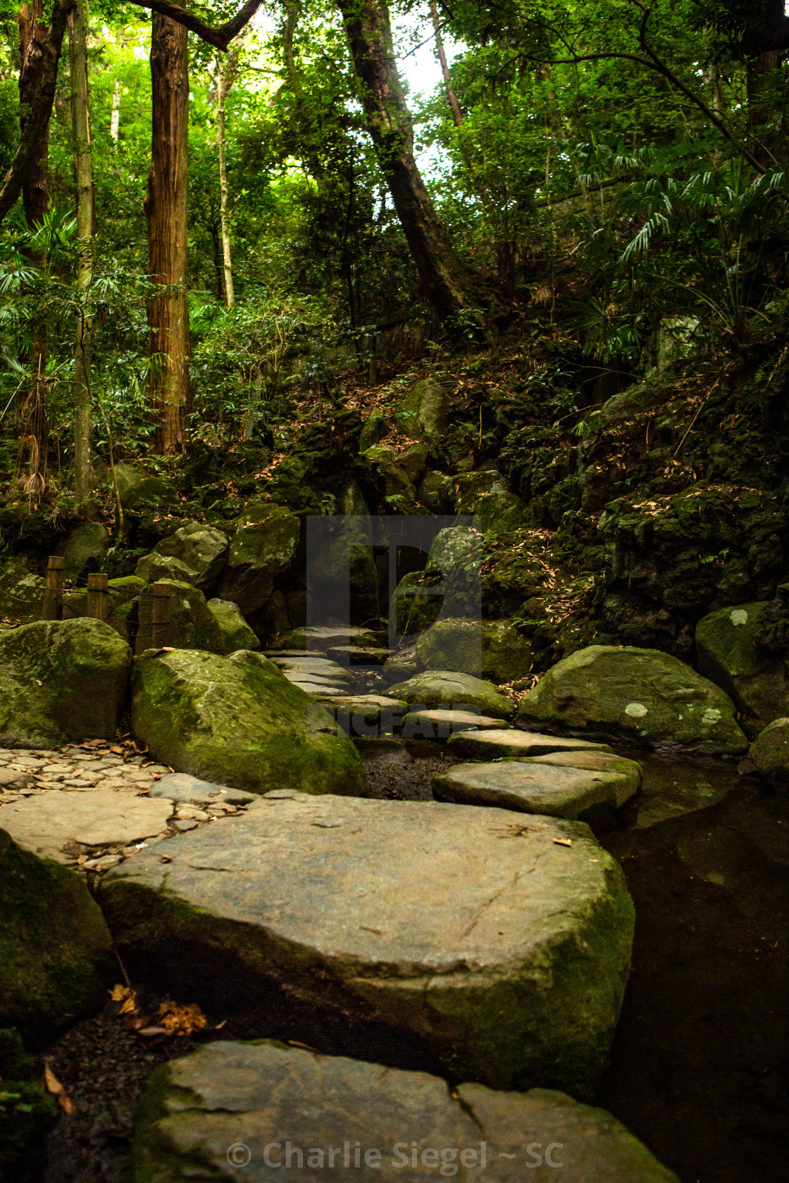 """Stone Path through a Sacred Forest, Japan"" stock image"