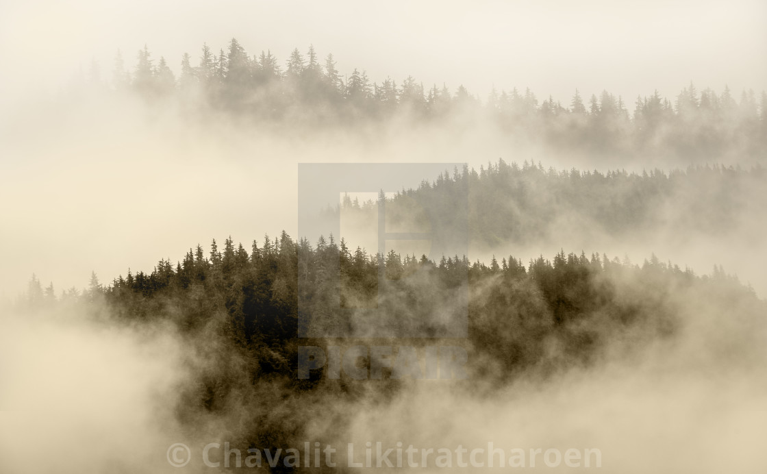 """fog covering the mountain forest"" stock image"