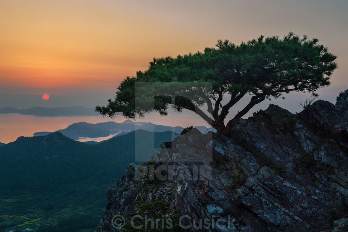 """Fir Tree at Sunset"" stock image"