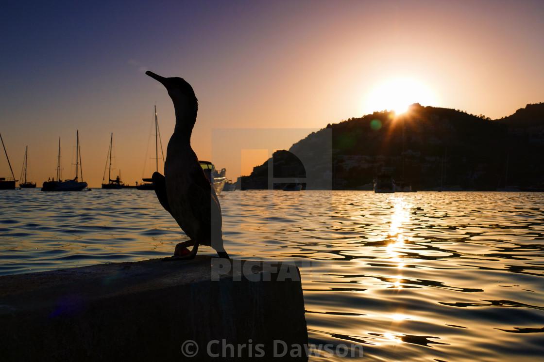 """""""Cormorant silhouette Mallorca"""" stock image"""
