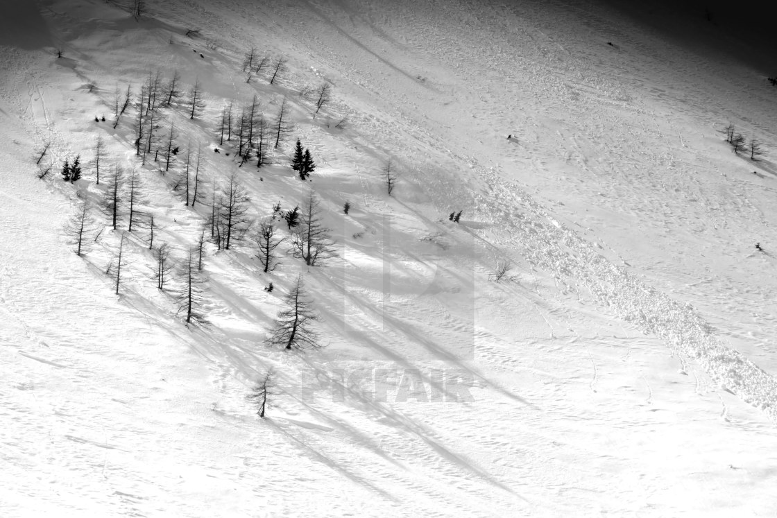 """Alpine trees in snow"" stock image"