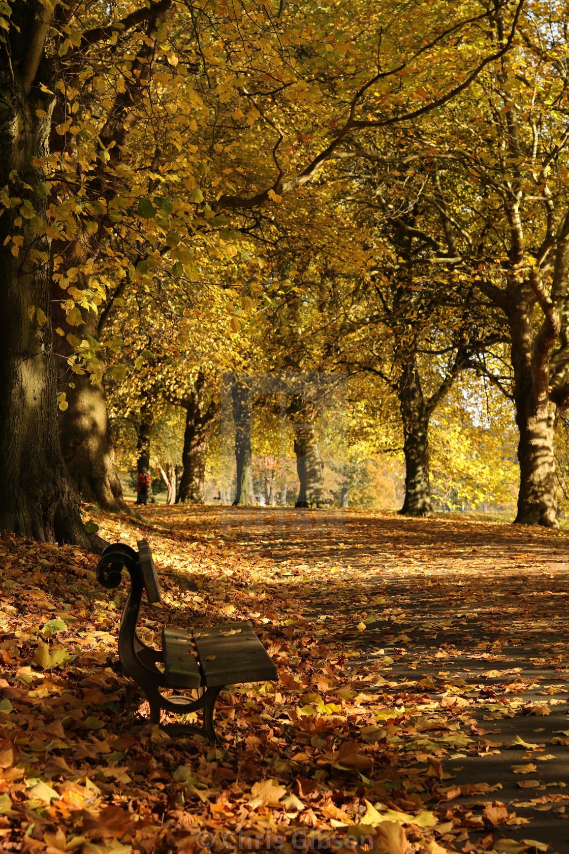 """Autumn scene."" stock image"