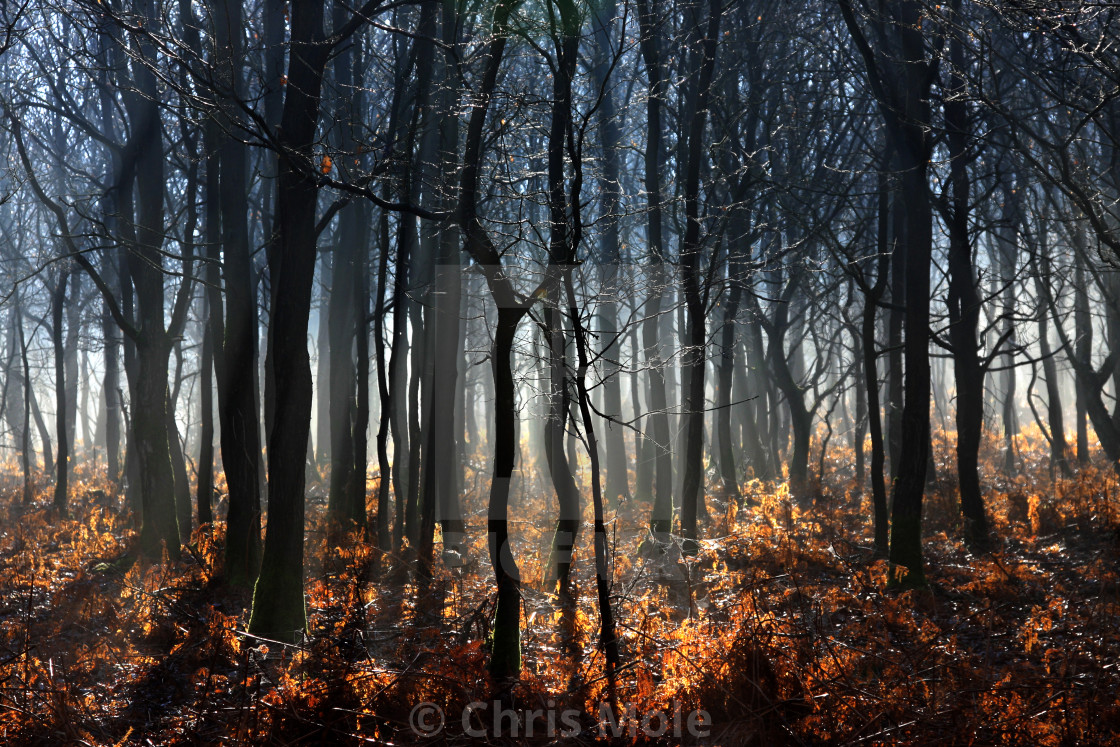 """Misty morning in Ashdown Forest"" stock image"