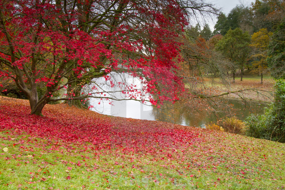 """Autumn at Stourhead"" stock image"