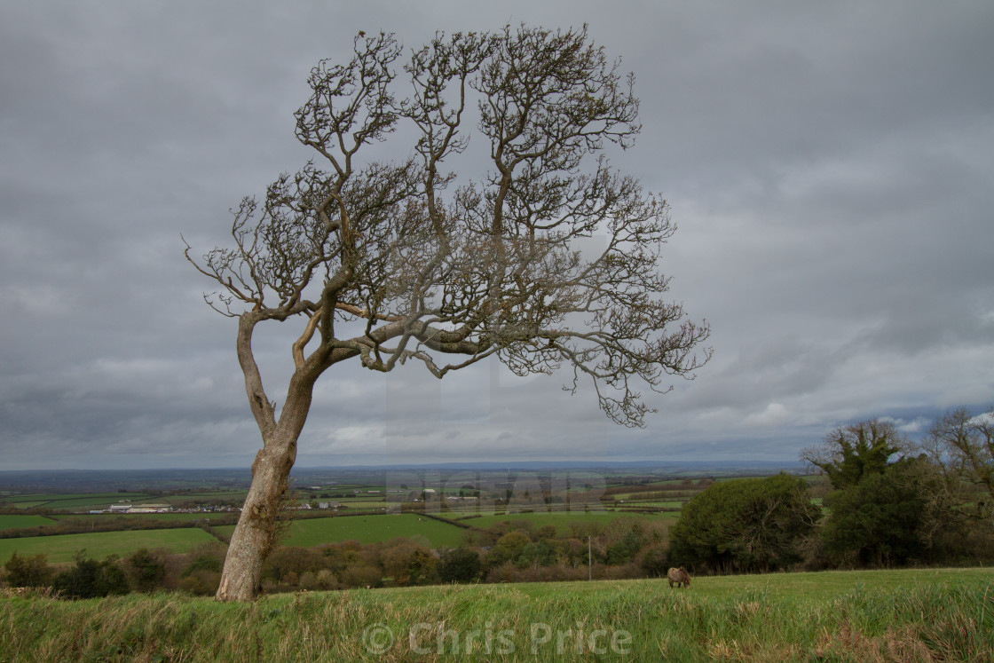 """Tree on the edge of Dartmoor"" stock image"