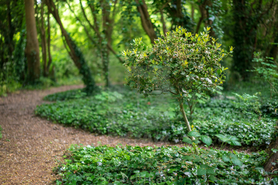 """Path through London Park"" stock image"
