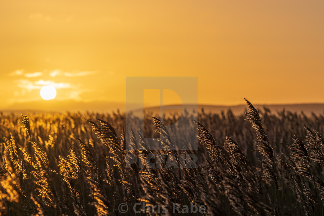 """Sunrise over reedbeds looking towards Poole Harbour from Swineham Point near..."" stock image"